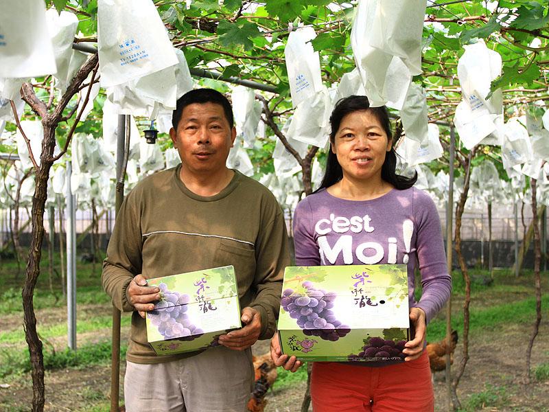 大村溫室葡萄.紫豐聯合農場